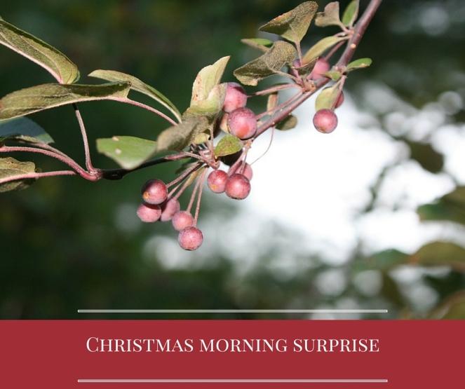 Christmas morning surprise